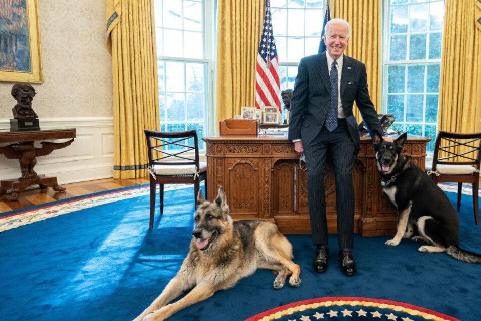 Besonderes Privileg für Bidens Hunde: Davon können selbst leitende Angestellte nur träumen