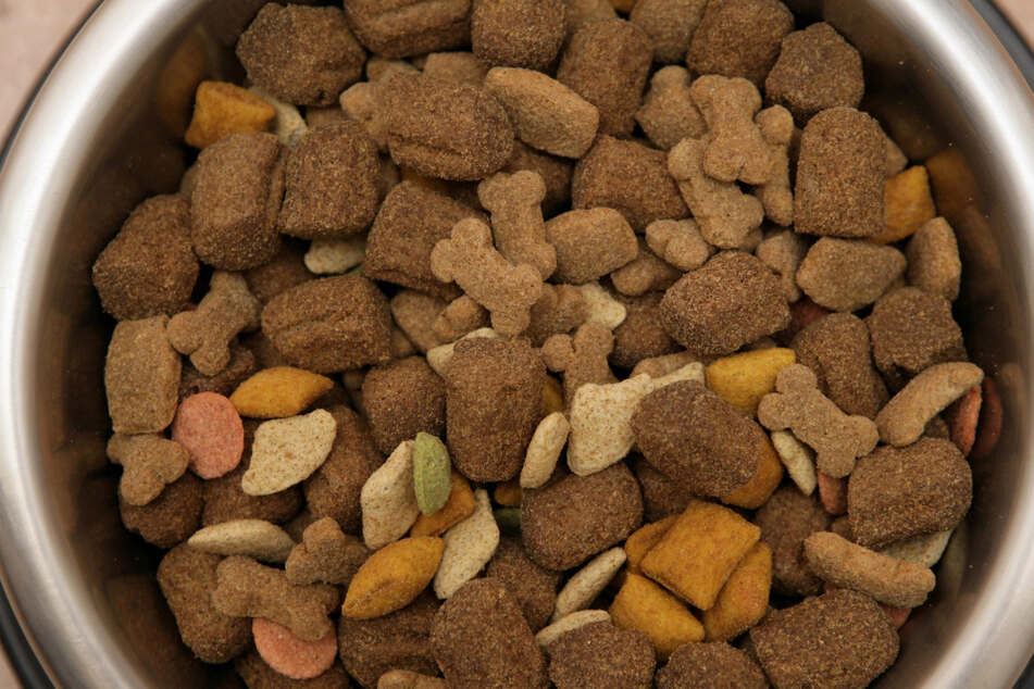 The mold can be found in dry dog food (stock image).