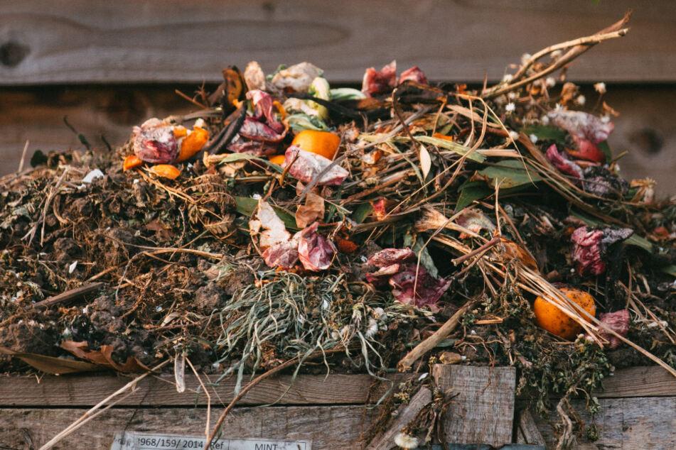 Gut geeignet ist Rasenschnitt zum Kompostieren.