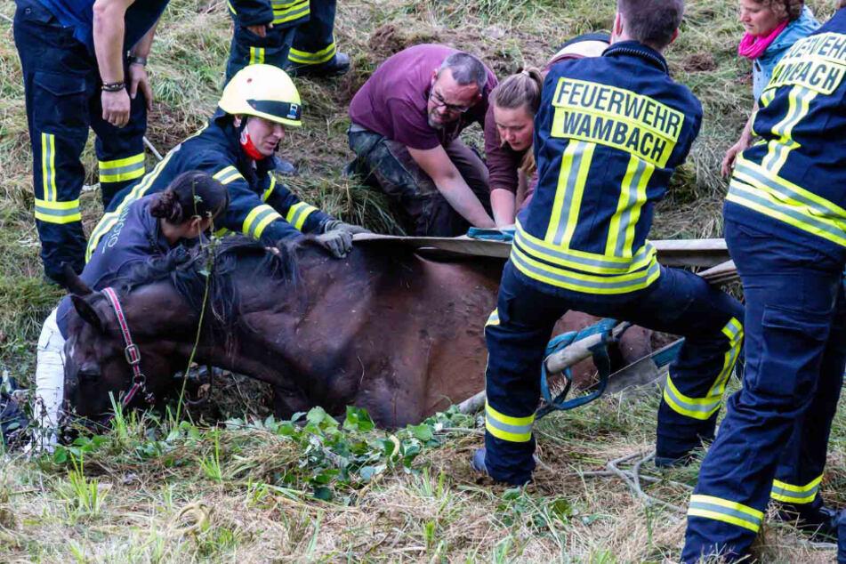 Feuerwehrleute und Helfer versuchen ein Pferd zu retten, das zuvor in einen Bachlauf im hessischen Schlangenbad gefallen war.