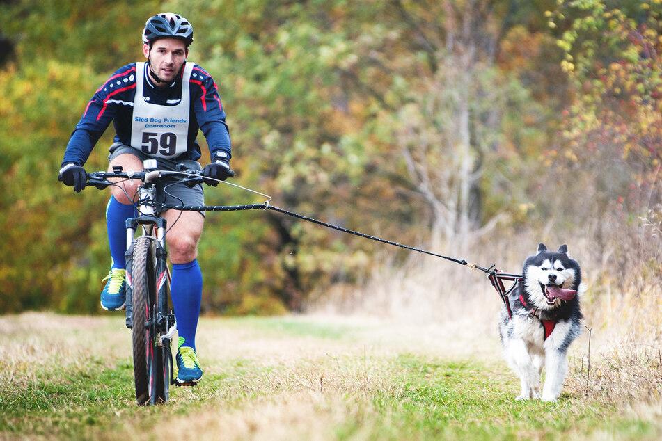 Dürfen Hunde eigentlich neben dem Fahrrad laufen?