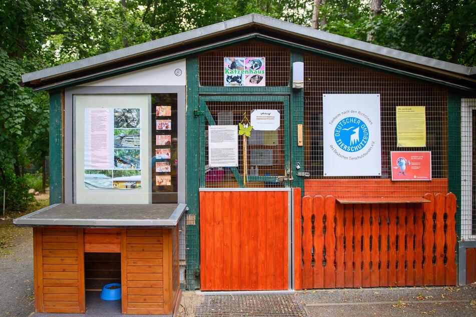 Im Katzenhaus der Fundtierunterkunft Halberstadt warten viele Tiere auf ein neues Zuhause.