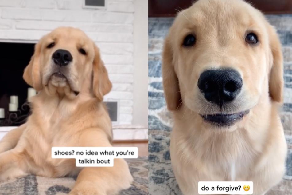 Hund treibt Besitzer mit lustiger Angewohnheit in den Wahnsinn