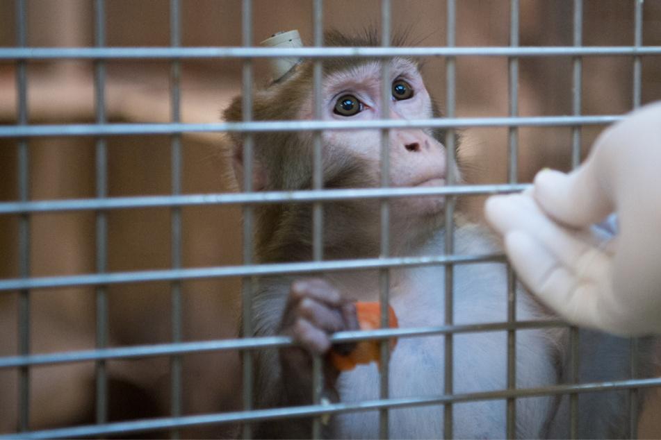 Tierversuche: So läuft die Genehmigung und das sind Alternativen