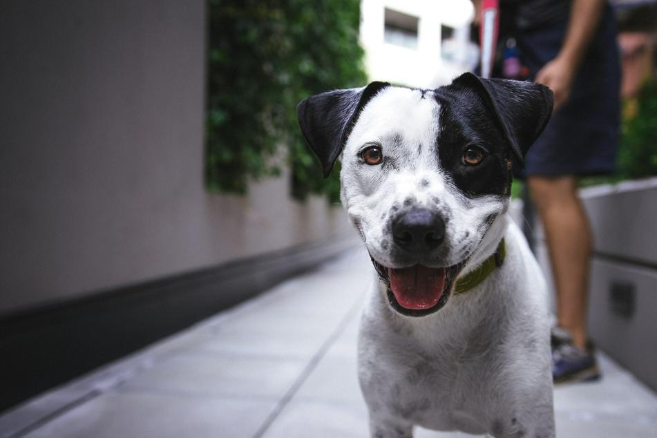 """Momentan ist es noch Sache der Länder, ob die """"Hundehaftpflicht"""" verpflichtend ist."""