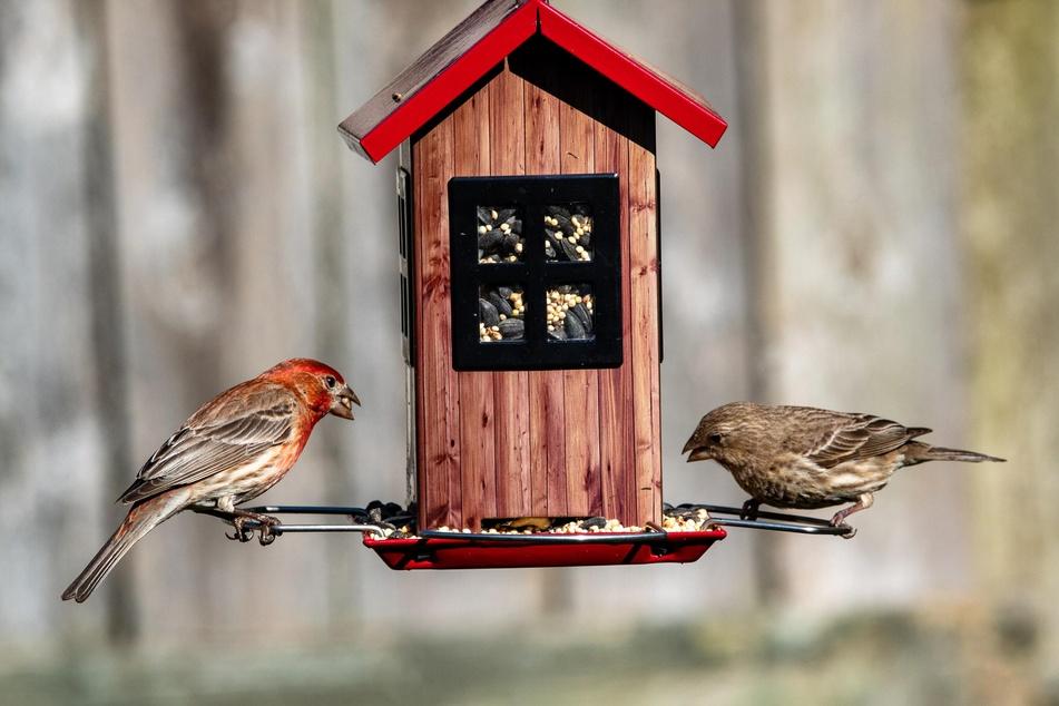 Vögel füttern im Sommer: Ein Fehler oder echte Hilfe?