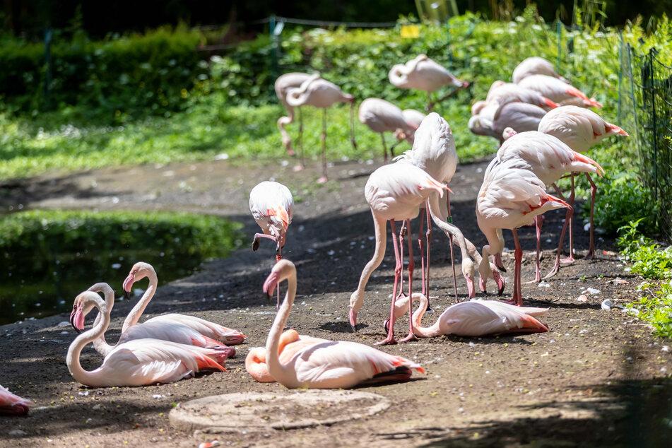 Ob sie sich auf die Besucher-Hunde freuen? Noch sind die Flamingos im Tierpark entspannt.