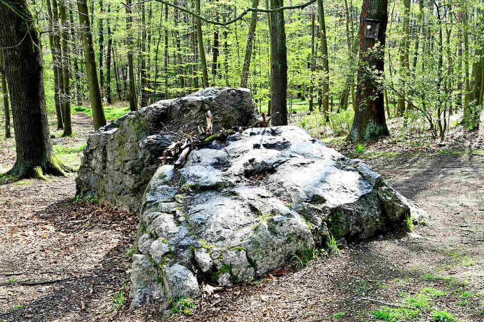 Zwei Oltersteine in der Dresdner Heide.