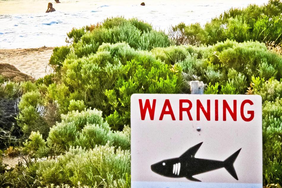 Mann geht zum Schnorcheln, später schwimmt nur noch seine Ausrüstung im Meer: Traf er auf einen Hai?