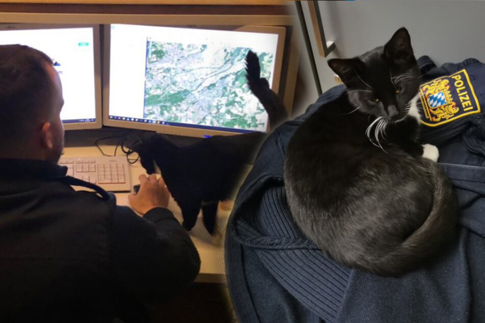 Kätzchen verdreht Polizisten den Kopf: Wem gehört die Kleine nur?