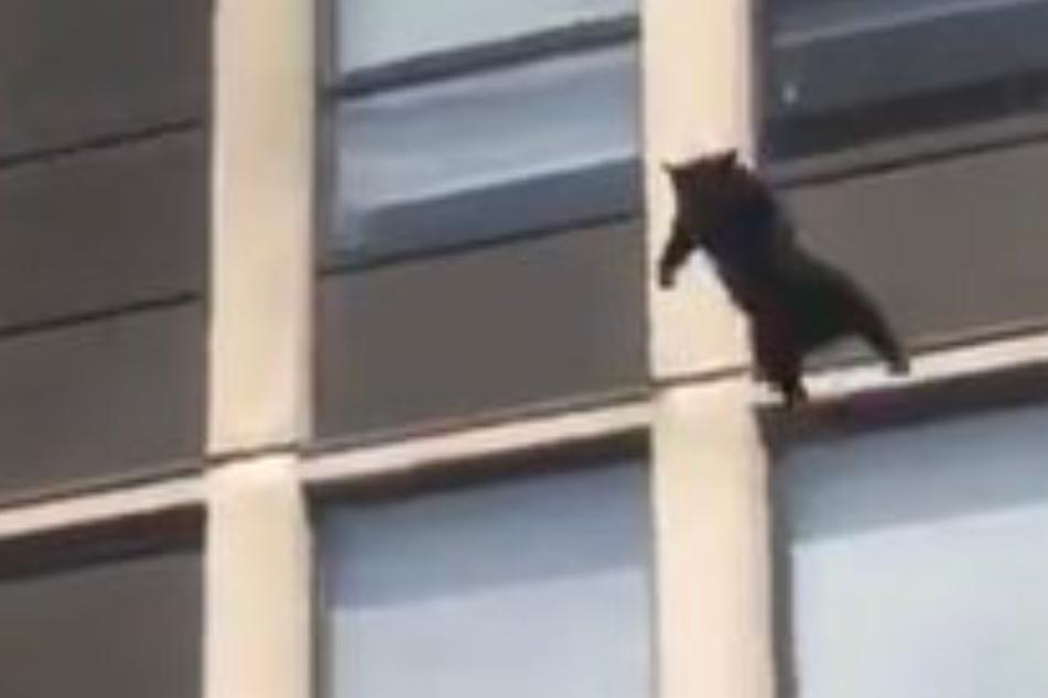 Katze steckt in brennendem Gebäude fest: Dann wagt sie den Sprung