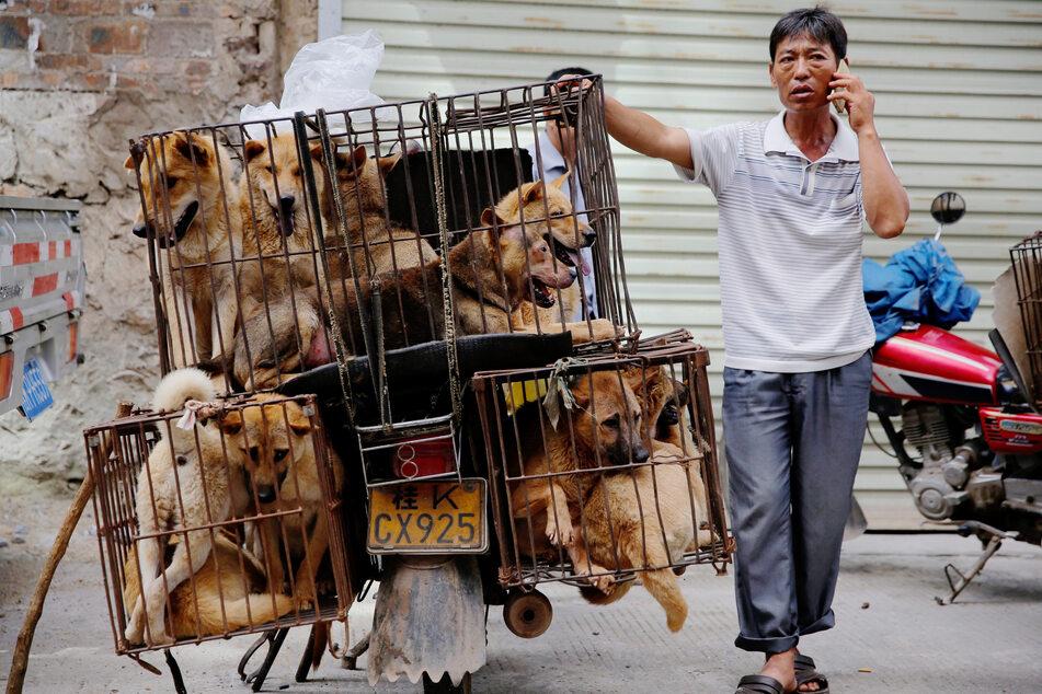 Bilder aus 2016. Ein Verkäufer von Hundefleisch, mit zahlreichen lebendigen Tieren in winzigen Käfigen.