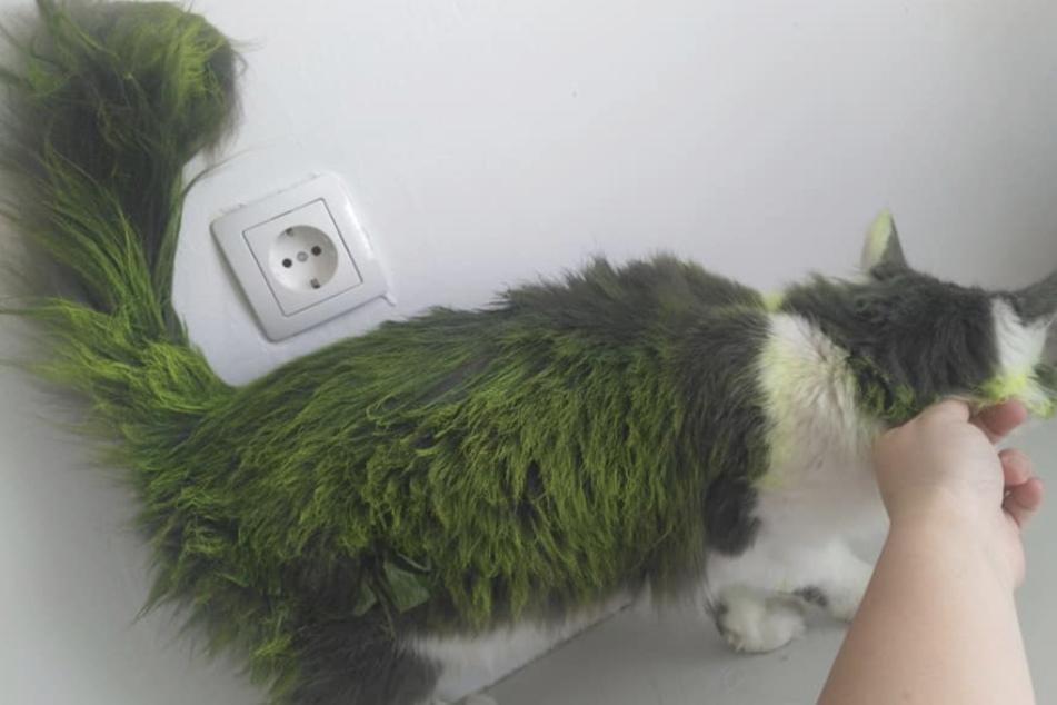 Besitzerin geschockt: Unbekannte färben Fell ihrer Katze grün!