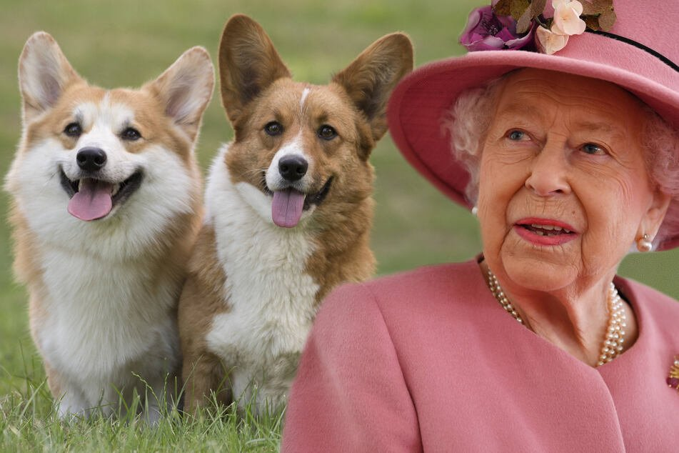 Queen Elizabeth II is pawsitively delighted with her new dogs!