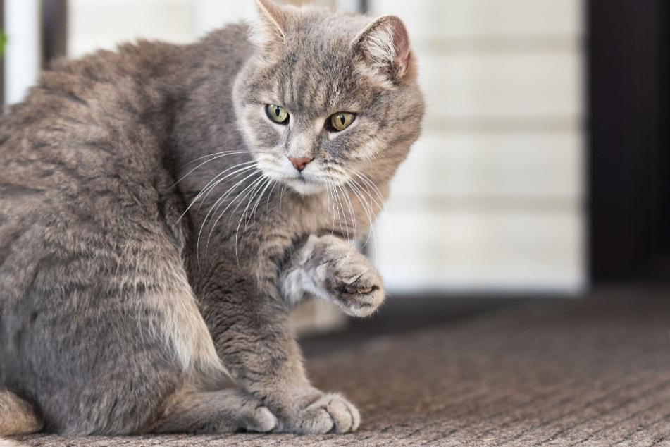 Besitzer entdecken schockierende Nachricht am Halsband ihrer Katze