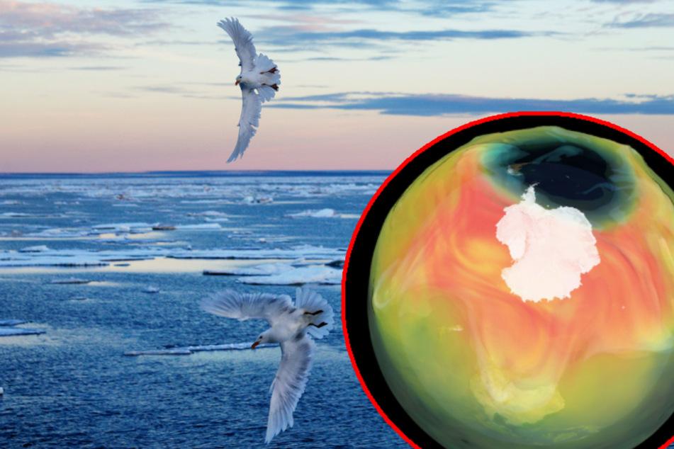 Ozonloch über dem Nordpol: Forscher entdecken erstmals Schäden über der Arktis