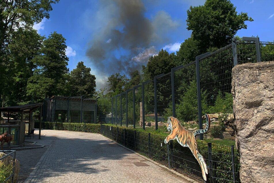 Über dem Tiergarten in Straubing steigt eine Rauchsäule empor.