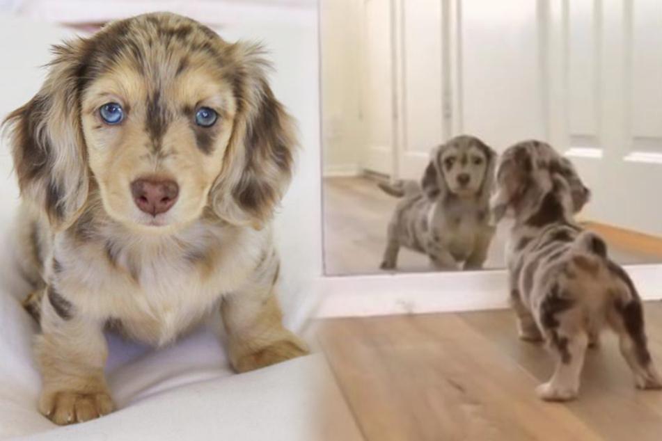 Hund rührt Tausenden das Herz: Was macht er denn da nur?