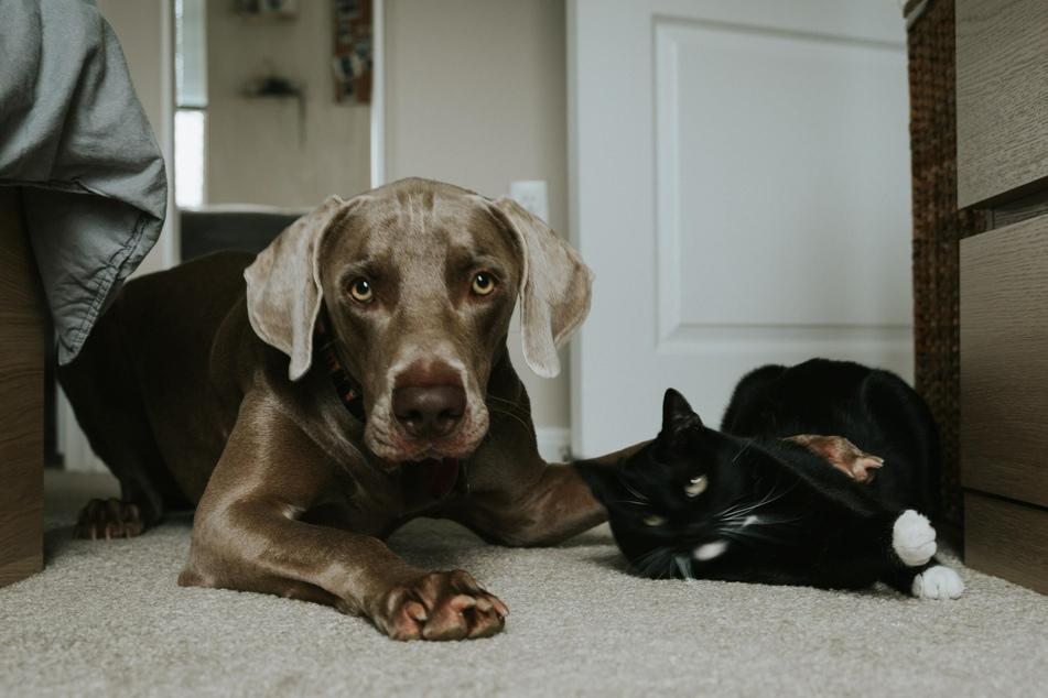 Hund und Katze können sich unter Umständen richtig gut verstehen.