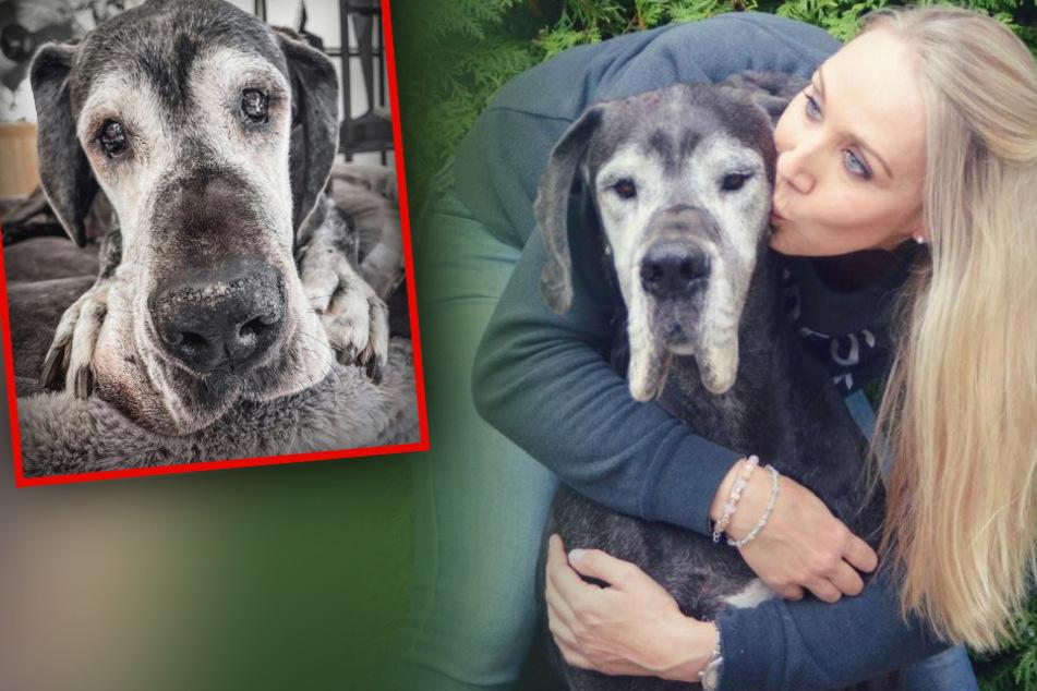 Große Trauer um Petfluencerin: Hundedame stirbt in den Armen ihres Frauchens