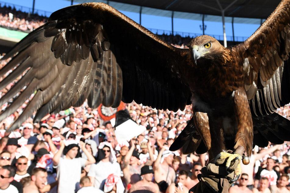 Steinadler Attila ist seit der Saison 2006/07 das Maskottchen von Eintracht Frankfurt. Der mächtige Raubvogel (1,90 Meter Flügelspannweite) wird den Frankfurter Adlern hoffentlich Glück in der neuen Saison bringen.