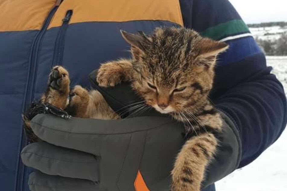The poor kitten was on the brink of death when Pete Macnab found it.