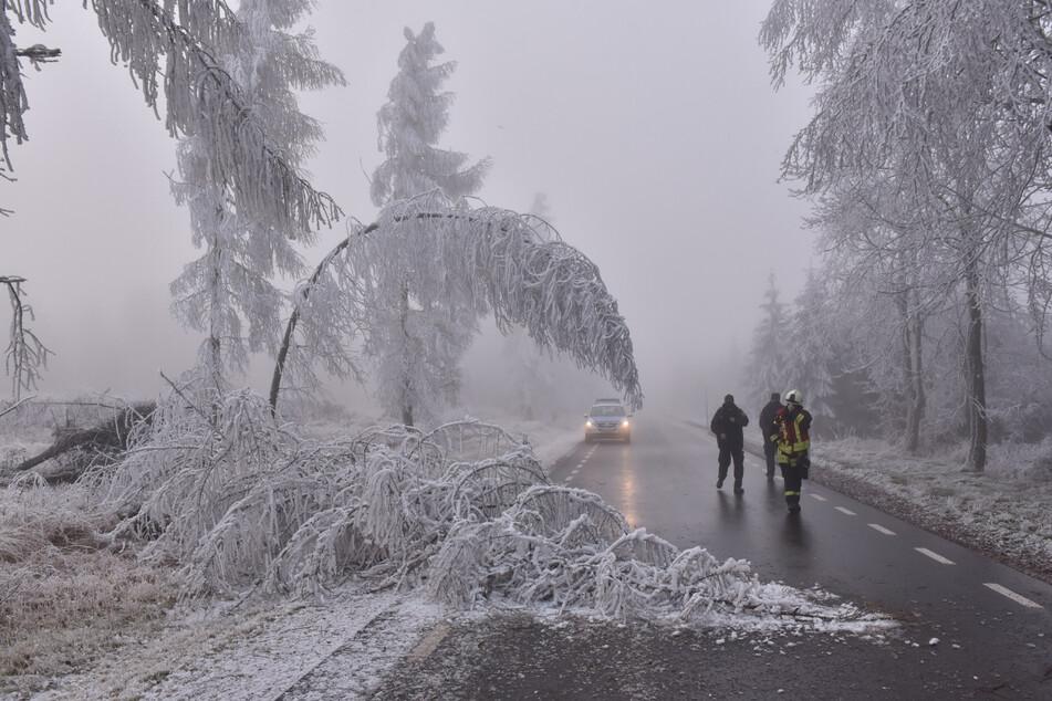 Unter der Last von Schnee und Reif können Bäume zusammenbrechen. (Archivbild)