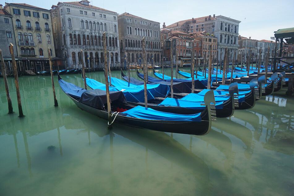 Gondeln sind auf dem Canal Grande an Holzpfählen festgemacht. Kaum betrieb auf dem Wasser - nun wurden ganz seltene Gäste gesichtet.