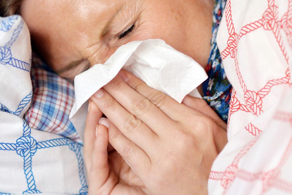 In der aktuellen Grippe-Saison, die zu Ende geht, gab es kaum Grippefälle.
