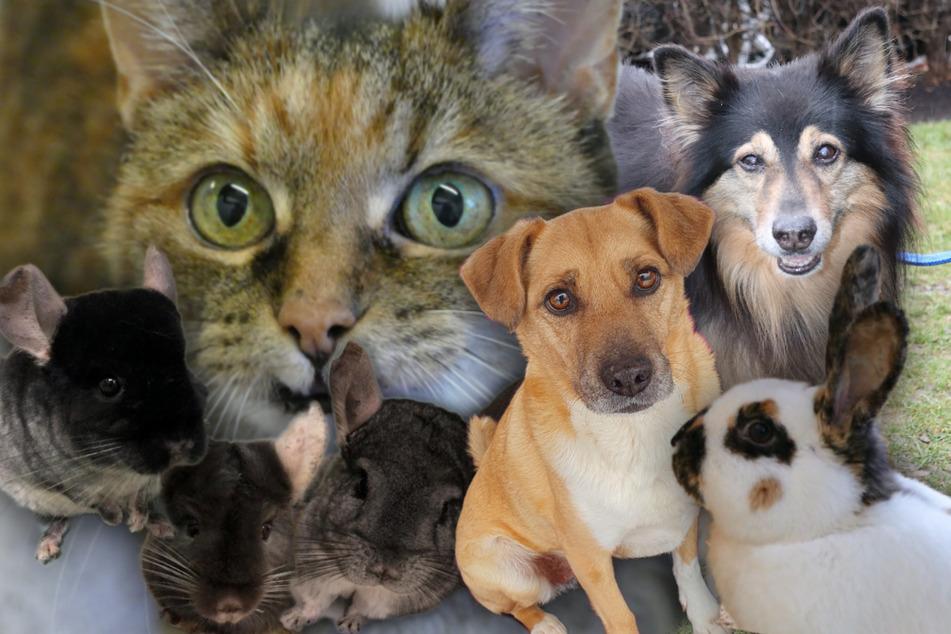 8 besondere Haustiere: Diese Hunde, Katzen und mehr suchen dringend ein Zuhause!