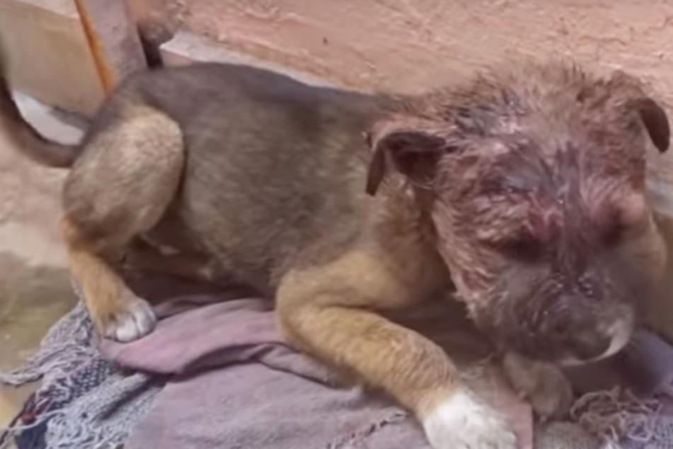Armer Hund verkriecht sich schwer verletzt in Ecke, bis jemand Herz zeigt