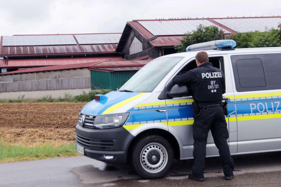 Gegen drei Allgäuer Milchviehbetriebe ermittelt die Staatsanwaltschaft wegen Tierschutz-Verstößen. (Archivbild)