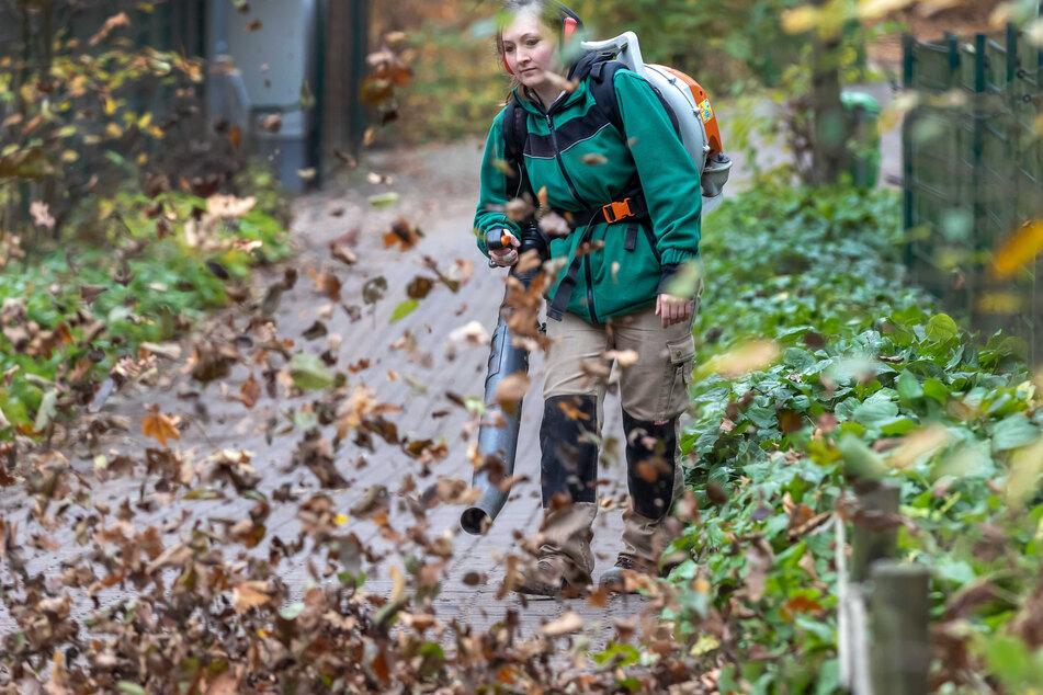 Tierpflegerin Stefanie Weippert (30) kann einmal völlig ungestört ihrer Arbeit nachgehen - mit dem Laubgebläse stört sie keine Besucher.