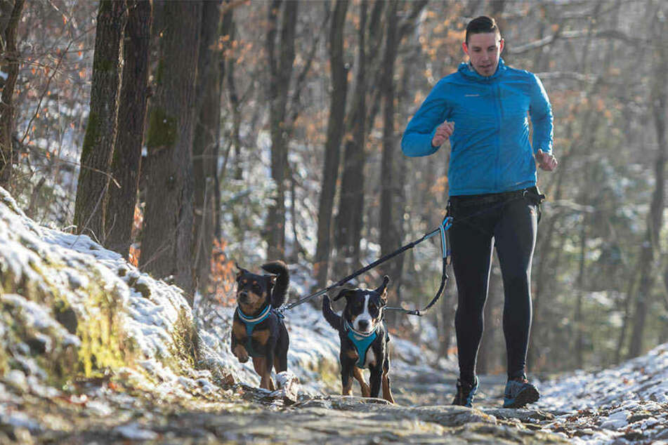 Im flotten Hundetempo auf der Augustusburger Berglauf-Strecke: Beim Canicross werden die Hunde am Hüftgurt des Läufers angeleint.