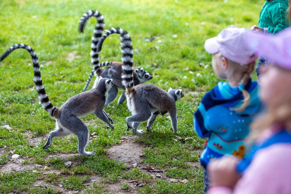 Zoos können ab Montag (21. Juni) ohne Terminbuchung und Kontaktdatenerfassung besucht werden.