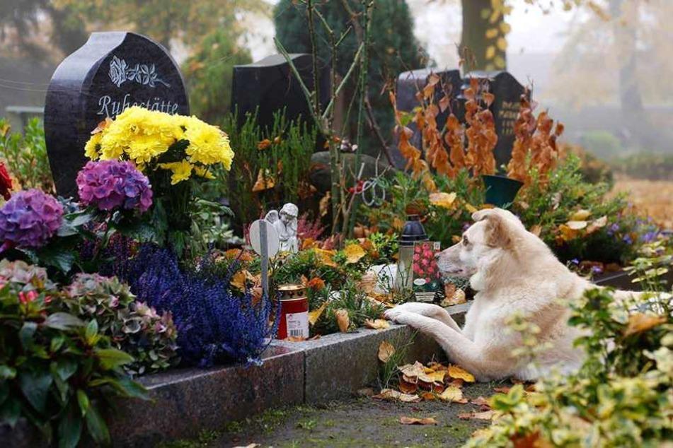 Ein Hund liegt an einer Grabstelle auf einem Tierfriedhof in Berlin.