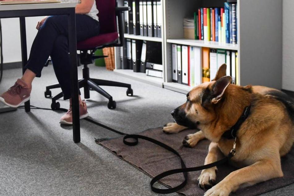 Tiere am Arbeitsplatz haben positive Effekte auf das gesamte Arbeitsklima. (Symbolbild)