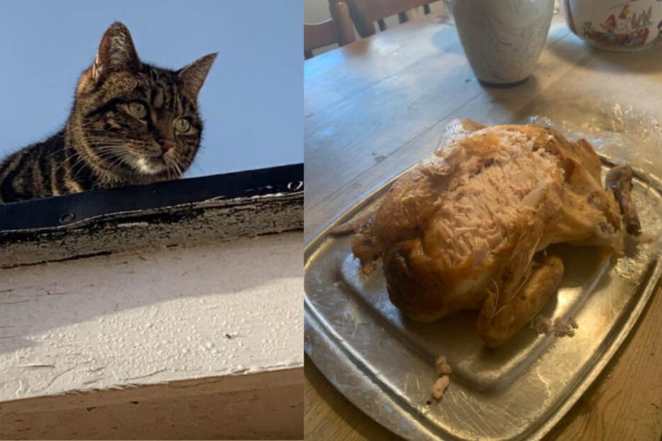 Diebische Katze macht sich über Weihnachtsbraten der Nachbarn her