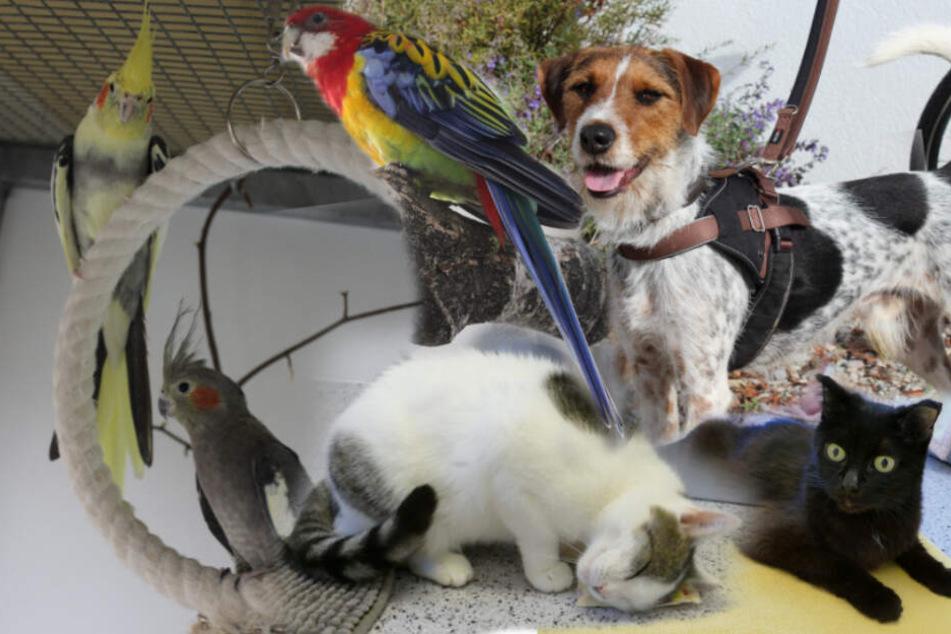 6 besonderer Hunde, Katzen und Vögel: Ihre Tier-Geschichten gehen ans Herz