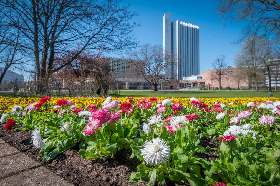Bunte Blütenträume: Chemnitz lässt den Frühling raus