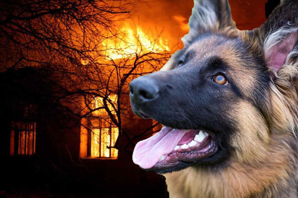 Die Wohnung ist nach dem Brand nicht mehr bewohnbar, zwei Hunde kamen dabei ums Leben. (Symbolbild)