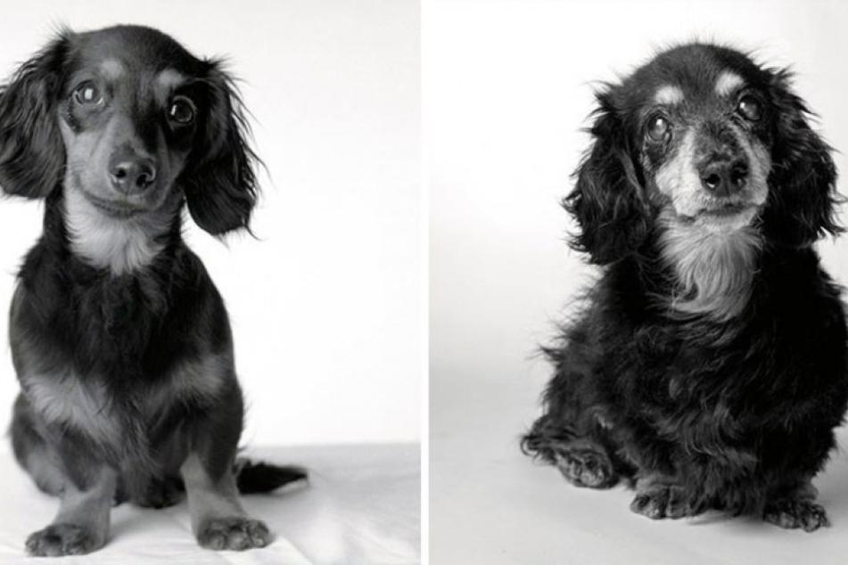So süüüß! Lily mit 5 Monaten (links) und 15 Jahren.