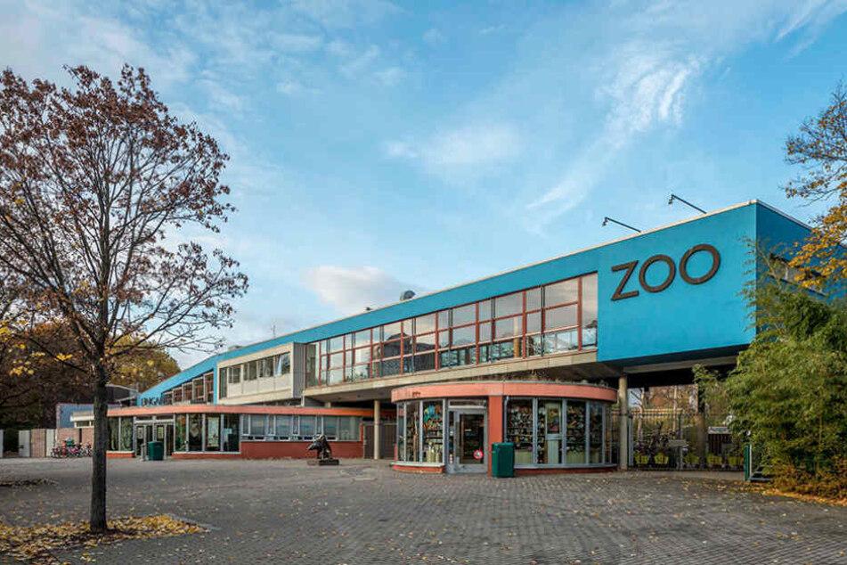 Im Dresdner Zoo wurde bei Tieren die gefürchtete Vogelgrippe festgestellt.