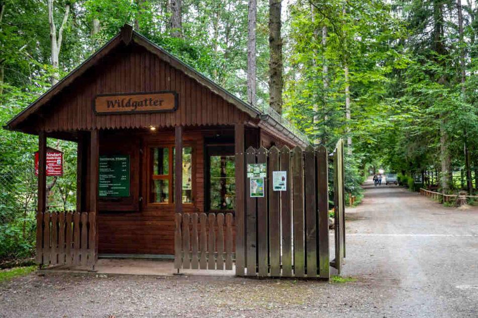 Der Eingang des Wildgatters in Oberabenstein. Im Oktober soll die Neugestaltung der Wildkatzenanlage fertig sein.