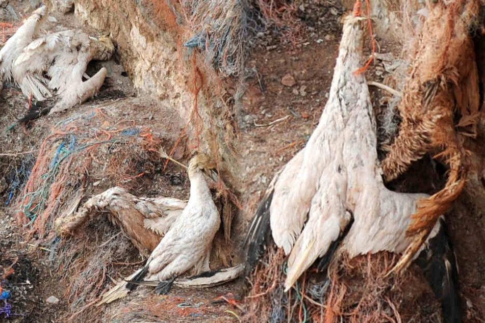 Plastikmüll im Meer hat schreckliche Auswirkungen auf deutsches Naturparadies