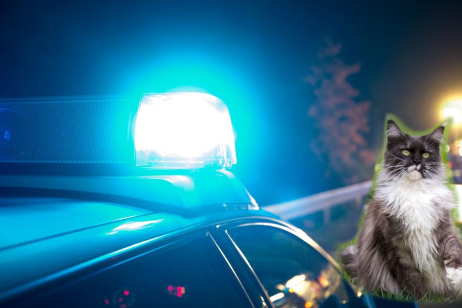 Kurios: Polizei wird zu Einbruch alarmiert, der Übeltäter ist kein Unbekannter