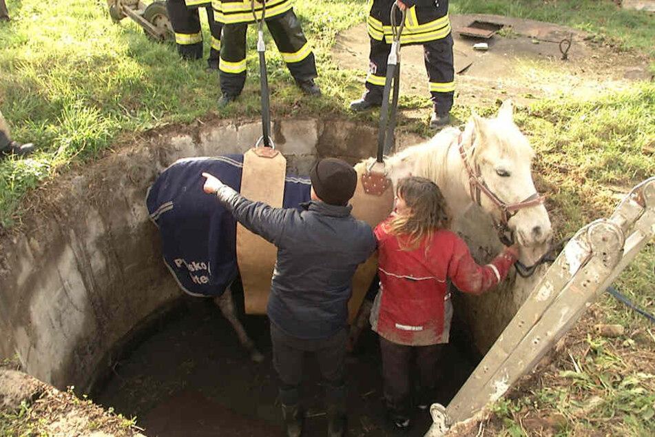 Pferdebesitzerin Steffi Dahnke kletterte aus lauter Panik hinterher, als Alegre in den Brunnen stürzte.