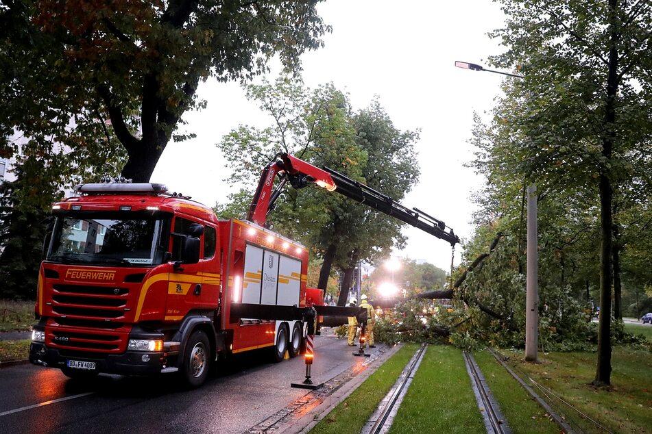 Auch die Straßenbahngleise sind von dem umgestürzten Baum betroffen.