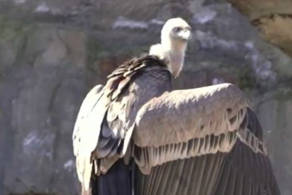 Zoo veterinarians are outraged when they find out how this bird died