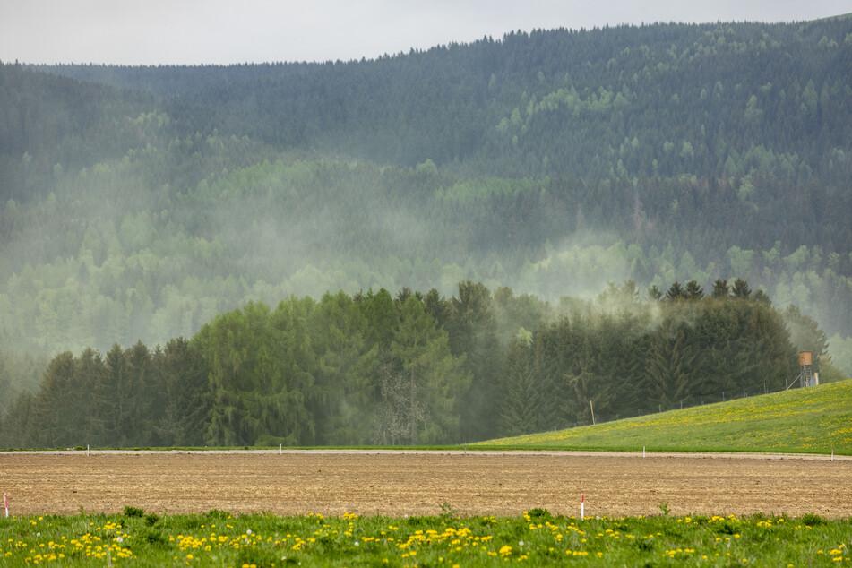 """Pollen-Alarm im Erzgebirge: Hier """"explodiert"""" der Wald"""